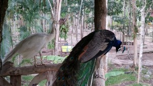 Queen Sirikit Forest Garden located in Kaeng Som Maew Queen Sirikit national park